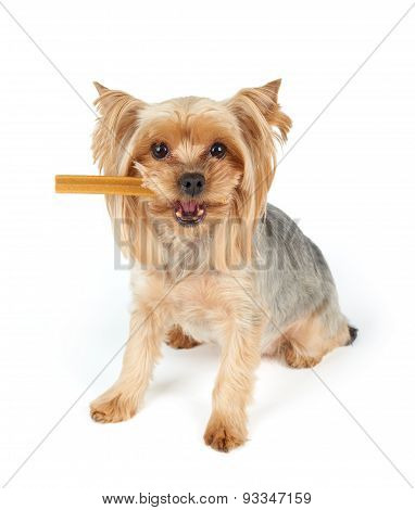 Dog With Dental Stick In The Mouth