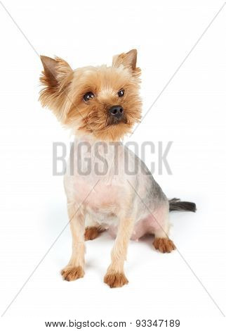 Dog With Funny Muzzle