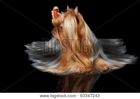 Dog With Turned Head