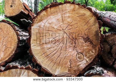Felled Trees In A Forest Close-up