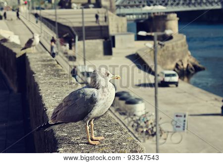Seagulls Are Sitting On Waterfront