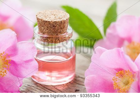Bottle Of Essential Roses Oil And Pink Wild Rose Flowers.