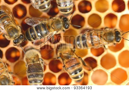 closeup of hardworking bees on honeycomb