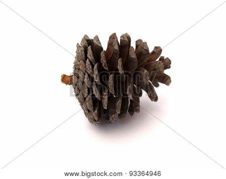 One pine cone in profile isolated on white background
