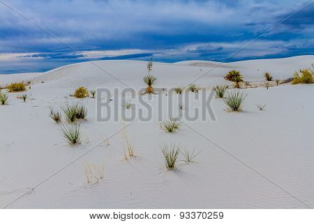 Dunes of White Sands New Mexico