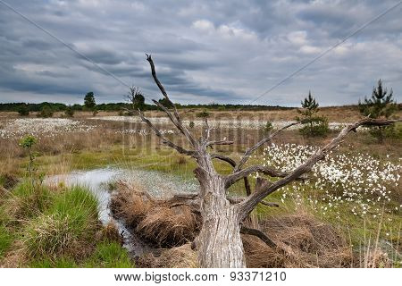 Old Tree Trunk On Swamp
