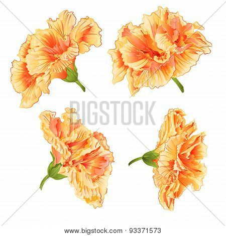 Blossoms Yellow Hibiscus Vector