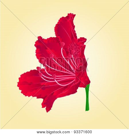 Rododenrodon Red Flower Isolated Vector