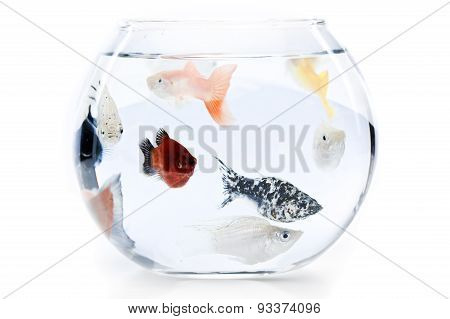 overcrowded fishbowl