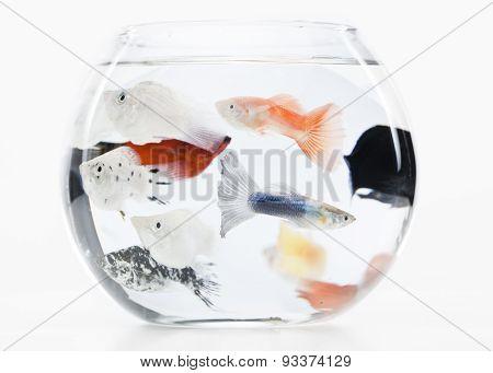 overcrowded fishtank