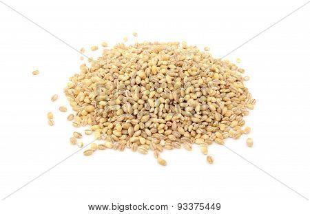 Pearl Barley Grains