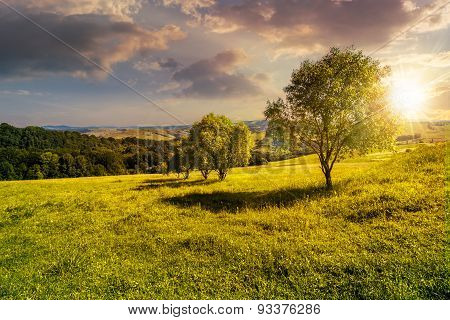 Few Trees On Hillside Meadow At Sunset