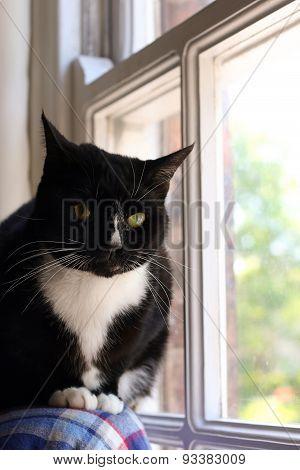 Black & white cat in a window