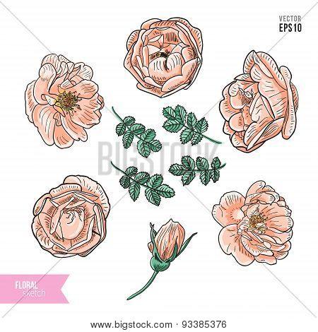 Briar rose color sketch set