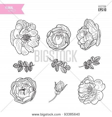 Briar rose sketch set