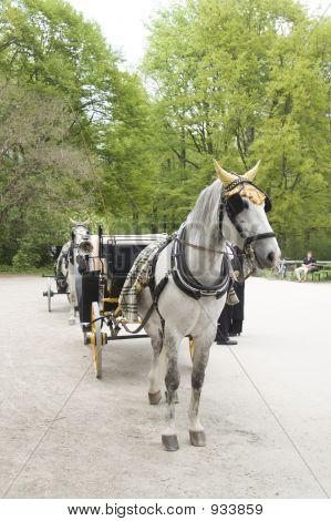 White Horse In English Garden, Munich