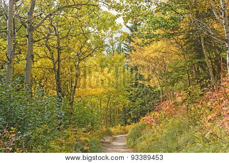 Fall Colors On A Western Mountain Trail