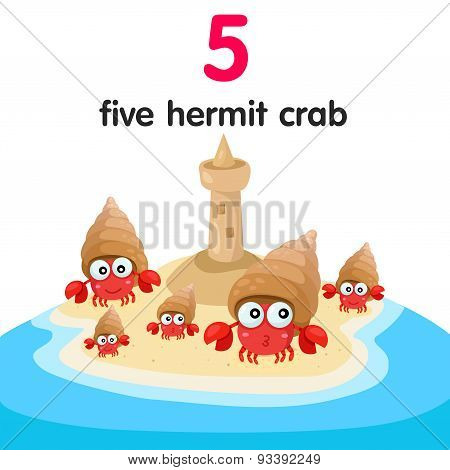 Illustrator of number five hermit crab