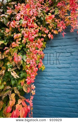 Colorful Leaves On Blue Wall