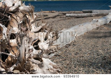 Aged Drift Wood On A Beach