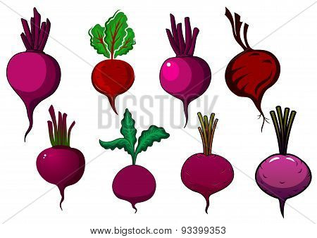 Purple beets vegetables with stalks and leaves