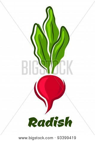 Radish vegetable with lush haulm