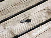 foto of dragonflies  - Big dragonfly sits on the old board - JPG