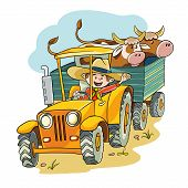picture of tractor-trailer  - happy farmer rides on the tractor in the trailer he had two cows - JPG