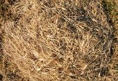 stock photo of dry grass  - Top view on the dry grass of the land which lies evenly on the lawn with wide angle distortion view - JPG