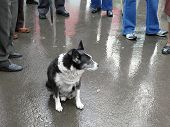 picture of stray dog  - portrait of stray dog among the crowd - JPG
