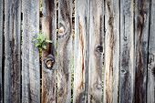 stock photo of wooden fence  - Old wooden fence with plant in home garden - JPG