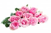 stock photo of rose bud  - Pile of pink  rose buds   isolated on white background - JPG