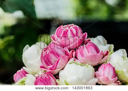 Beautiful, Bush potted lilies The beautifully decorative.