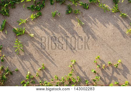 The wall and grass for background. Plants growing on the wall