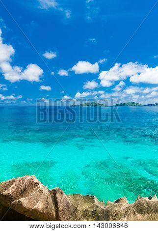 Jungle Summertime Shore