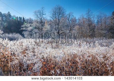 Winter day, nature covered with hoar frost
