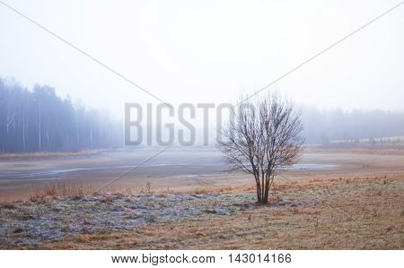 Bare tree on a field covered with hoar frost. Rural landscape with early morning mist.