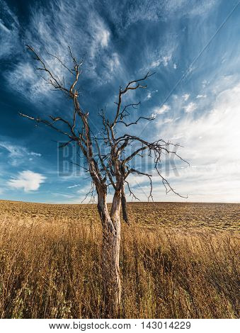 Lonely dried tree in field against cloudscape
