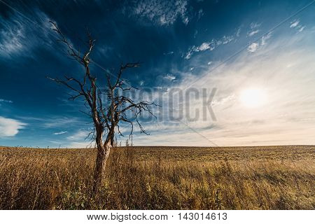 Lonely dried tree in field against cloudscape and setting sun