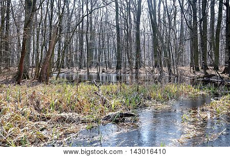 view free floodplain forest in the spring