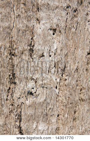 Textura: Casca de palmeira