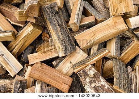 freshly chopped firewood in the forest close-up