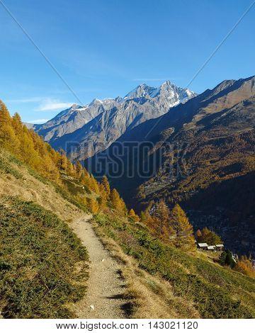 Golden larch forest in Zermatt. Hiking path and high mountains. Autumn scene.