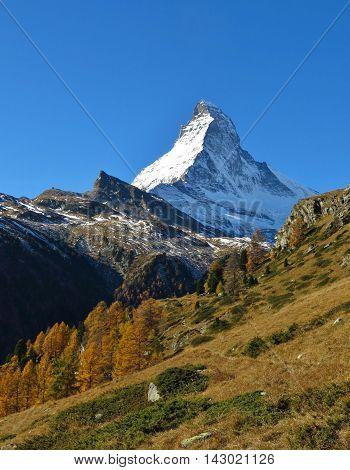 Autumn landscape in Zermatt. Snow capped Matterhorn. Golden larch trees.