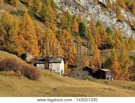Autumn scene in Zermatt Swiss Alps. Golden larch forest. Old sheds.