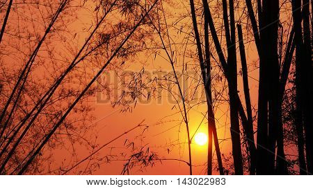 romantic landscape with bamboo trees on background of sunset