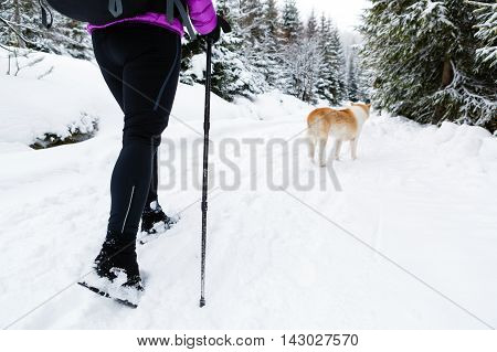 Female backpacker hiking in white winter woods with akita dog. Legs and boots trekking. Recreation fitness and healthy lifestyle outdoors in nature. Motivation and inspirational winter landscape.
