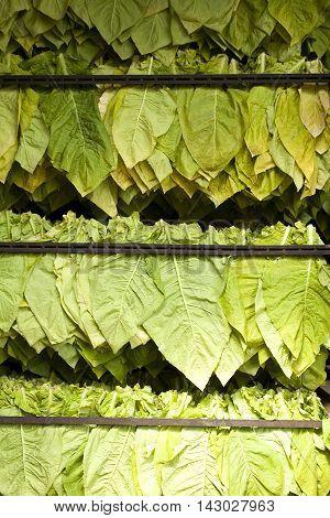 Traditional Tobacco Leaf Dryer