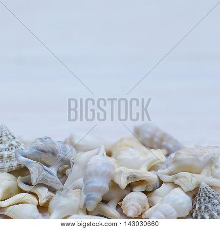 Marine vintage border - seashell on light blue background (shallow DOF)