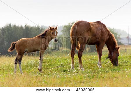 Rustic Horse With Foal